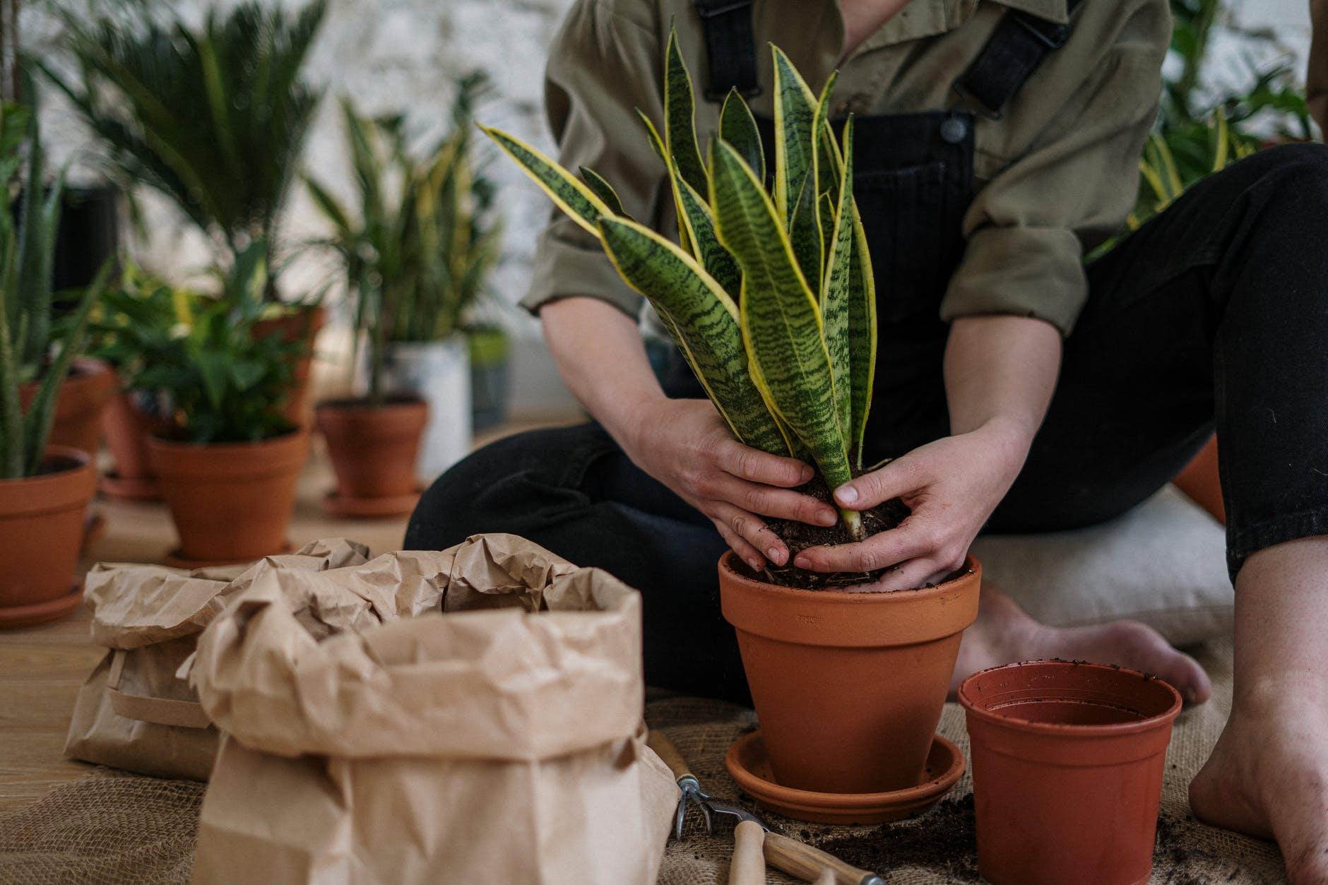 Woman planting a cactus.